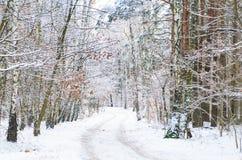 Camino del invierno en el bosque cubierto con nieve Imagen de archivo