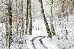 Camino del invierno en el bosque cubierto con nieve Fotos de archivo libres de regalías