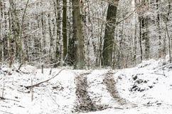 Camino del invierno en el bosque cubierto con nieve Fotografía de archivo libre de regalías