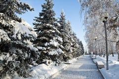 Camino del invierno en el parque. Fotografía de archivo