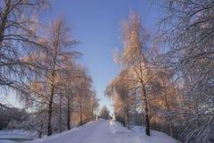 Camino del invierno en el parque Imagen de archivo