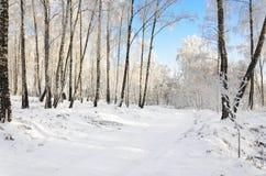 Camino del invierno en la arboleda Imagenes de archivo