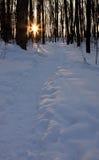 Camino del invierno en la oscuridad foto de archivo libre de regalías