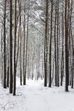 Camino del invierno en las maderas Imagen de archivo libre de regalías