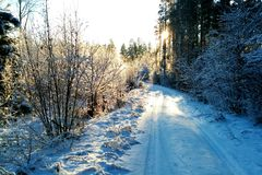 Camino del invierno en sol Fotografía de archivo