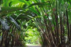 Camino del jardín bajo la planta de Heliconia Fotografía de archivo