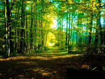 Camino del misterio en bosque salvaje peligroso fotografía de archivo