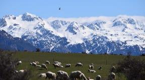 Camino del oeste viejo de Nueva Zelanda Foto de archivo libre de regalías