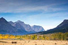 Camino del oro a la montaña fotos de archivo