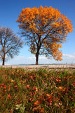 Camino del otoño Fotografía de archivo