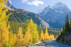 Camino del otoño Fotos de archivo libres de regalías