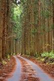 Camino del otoño del bosque Fotos de archivo libres de regalías
