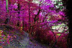 Camino del otoño en el bosque Imágenes de archivo libres de regalías