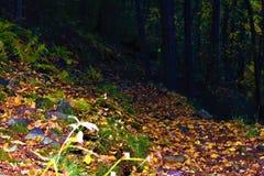 Camino del otoño en el bosque Fotografía de archivo libre de regalías