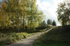 Camino del otoño en la montaña entre los abedules de oro Imagen de archivo