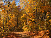Camino del otoño en madera. Fotografía de archivo libre de regalías