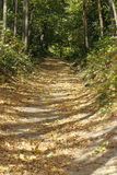 Camino del otoño a la madera Foto de archivo libre de regalías