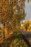 Camino del otoño a lo largo de campos de trigo de invierno Imagenes de archivo