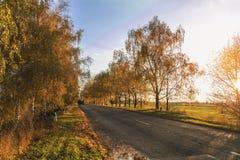Camino del otoño a lo largo de campos de trigo de invierno Imágenes de archivo libres de regalías