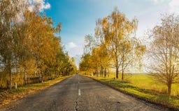 Camino del otoño a lo largo de campos de trigo de invierno Fotos de archivo libres de regalías
