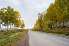 Camino del otoño, saliendo, entre los árboles amarillos Foto de archivo libre de regalías