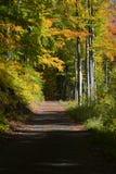 Camino del otoño a través del bosque fotografía de archivo