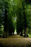 Camino del parque fotografía de archivo