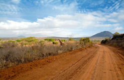Camino del safari imagen de archivo libre de regalías