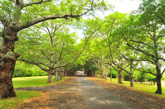 Camino del señorío Foto de archivo libre de regalías
