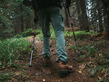 Camino del senderismo a través de la madera en las montañas de Cárpatos Imágenes de archivo libres de regalías