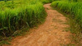 camino del suelo entre el campo de hierba fotografía de archivo libre de regalías