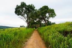 camino del suelo entre el campo de hierba con el cielo foto de archivo