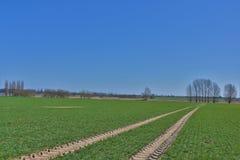 Camino del tractor en el campo Imagen de archivo libre de regalías