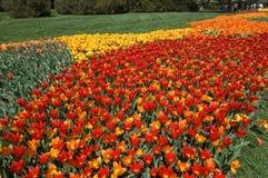 Camino del tulipán Imágenes de archivo libres de regalías