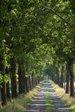 Camino del verano Imágenes de archivo libres de regalías