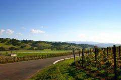 Camino del viñedo cerca de Los Olivos, California Foto de archivo