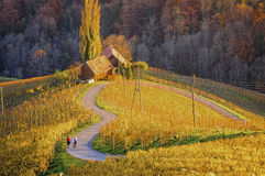 Camino del vino y viñedos en la forma de un corazón con dos caminante fotos de archivo