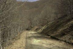 Camino denso inactivo de los árboles forestales Imagen de archivo libre de regalías