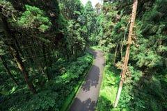 Camino dentro del bosque Imagen de archivo libre de regalías