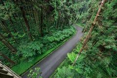 Camino dentro del bosque Imagen de archivo
