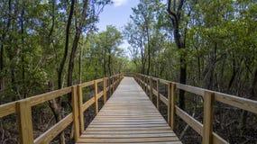 Camino dentro del bosque del mangle Imagen de archivo