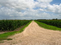Camino dissappearing en campo de maíz imagenes de archivo