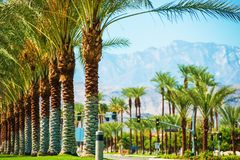 Camino el valle Coachella de las palmas Imágenes de archivo libres de regalías