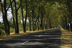 Camino en árboles Fotografía de archivo libre de regalías