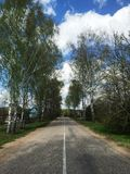 Camino en árboles fotos de archivo