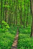 Camino en árboles Imágenes de archivo libres de regalías