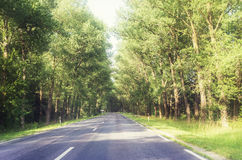 Camino en bosque Imagen de archivo libre de regalías