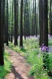Camino en bosque Foto de archivo libre de regalías