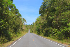 Camino en bosque Imagen de archivo