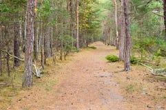 Camino en bosque Imagenes de archivo
